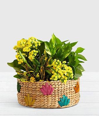 Yellow flower dish garden plant