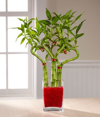 Money Plant Indoor Decor Ideas