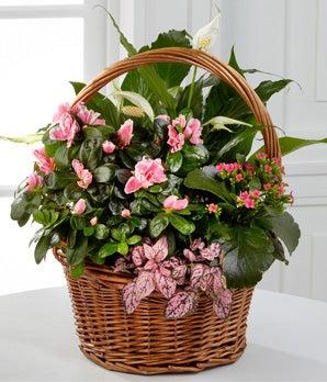 Pink Inspirations Dish Garden - 9-inch