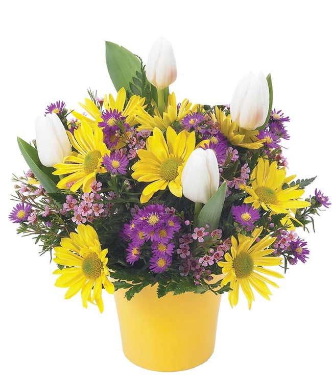 Yellow daisies and tulips