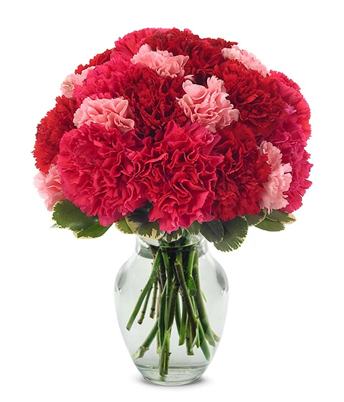 Red carnations and pink carnations in a glass vase