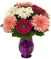 Gerbera Wishes