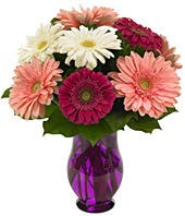 Gerbera Daisies in bright colors delivered in purple vase