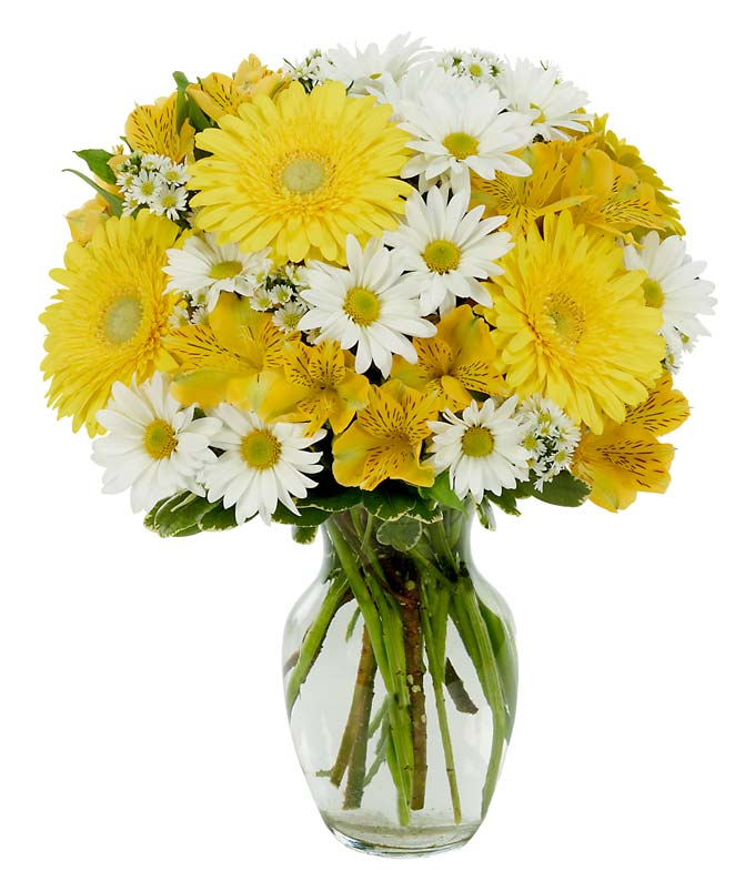 Yellow gerbera daisies and yellow alstroemeria in vase