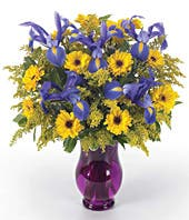 Blue Iris and yellow daisies in a purple vase