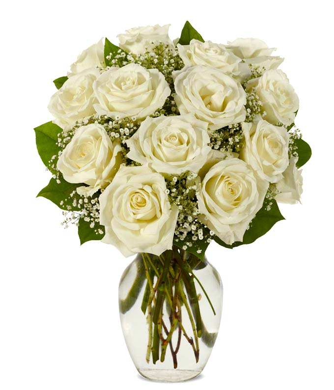One dozen white roses with gypsophila in vase