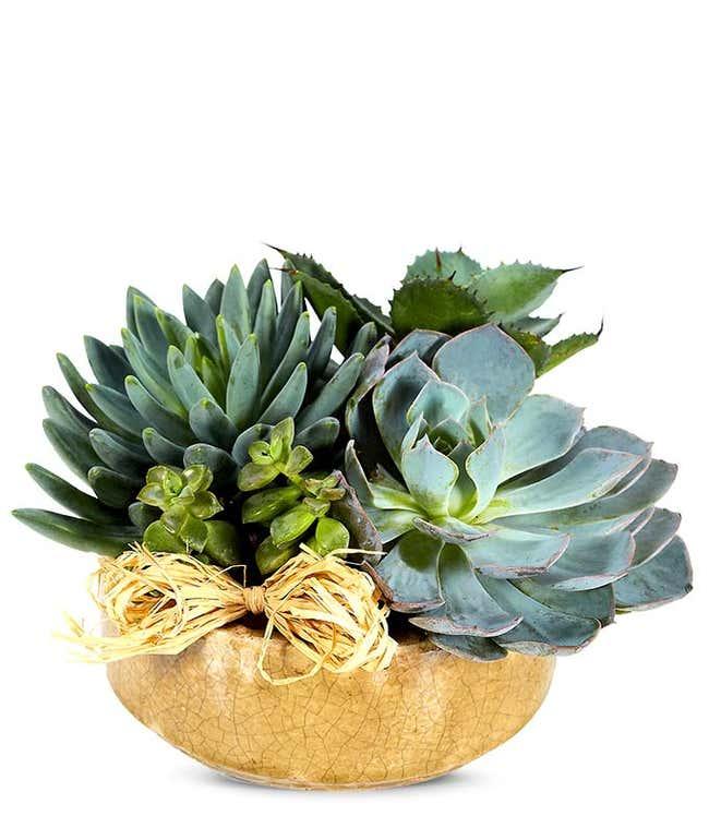 Succulent plant dish garden