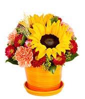 Sweet Sunflower Bouquet
