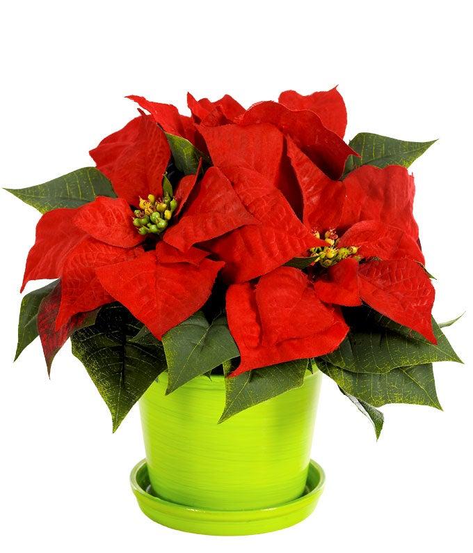 Christmas Poinsettia Surprise
