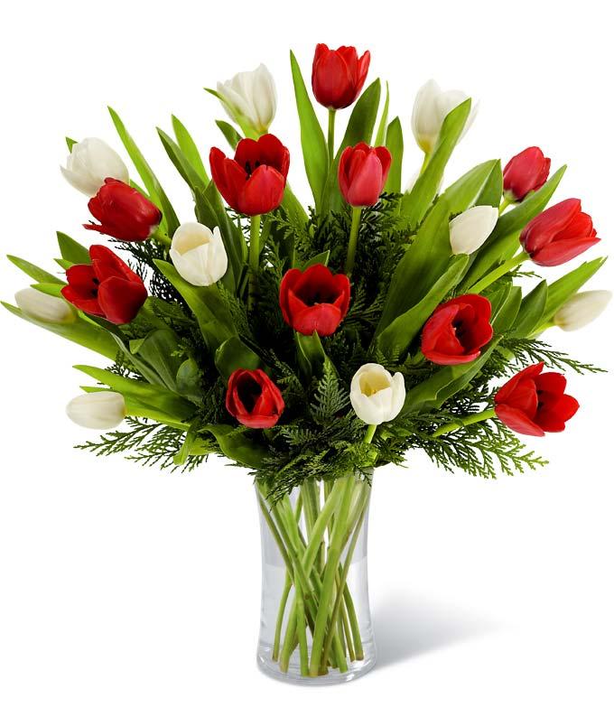 Tulip Surprise