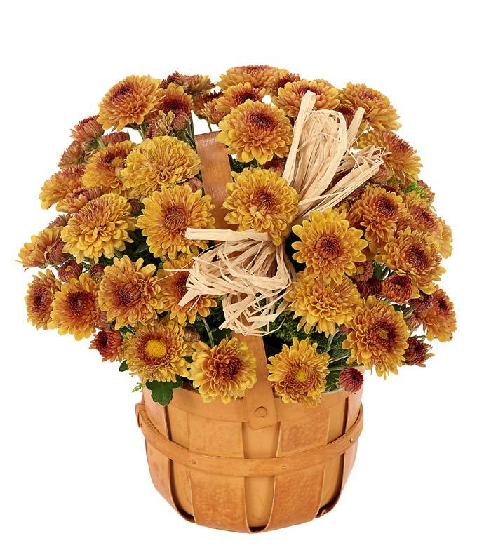 Bronze Mum Bushel Basket