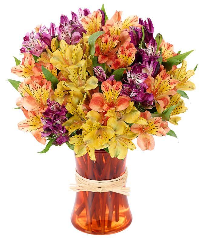 Peruvian Lily Rainbow
