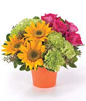 Sunflowers, pink roses and green carnations delivered