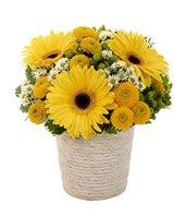 Sunny Day Daisy Bouquet