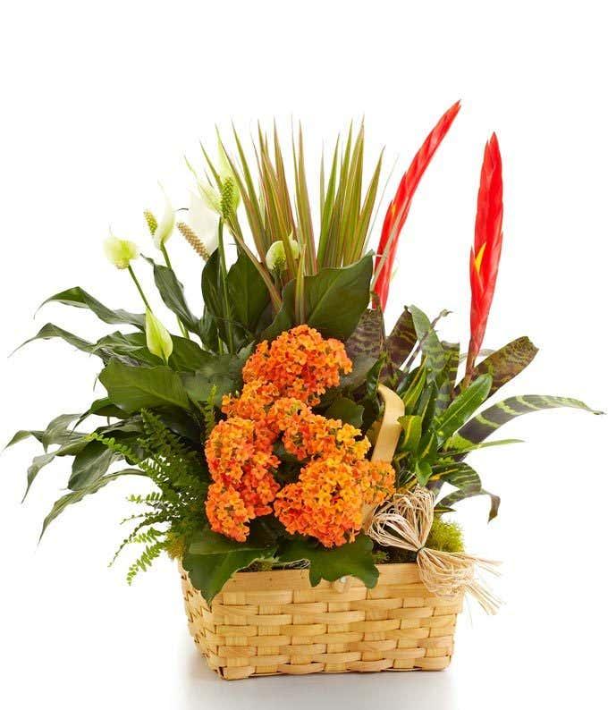 Large Blooming Dish Garden Basket