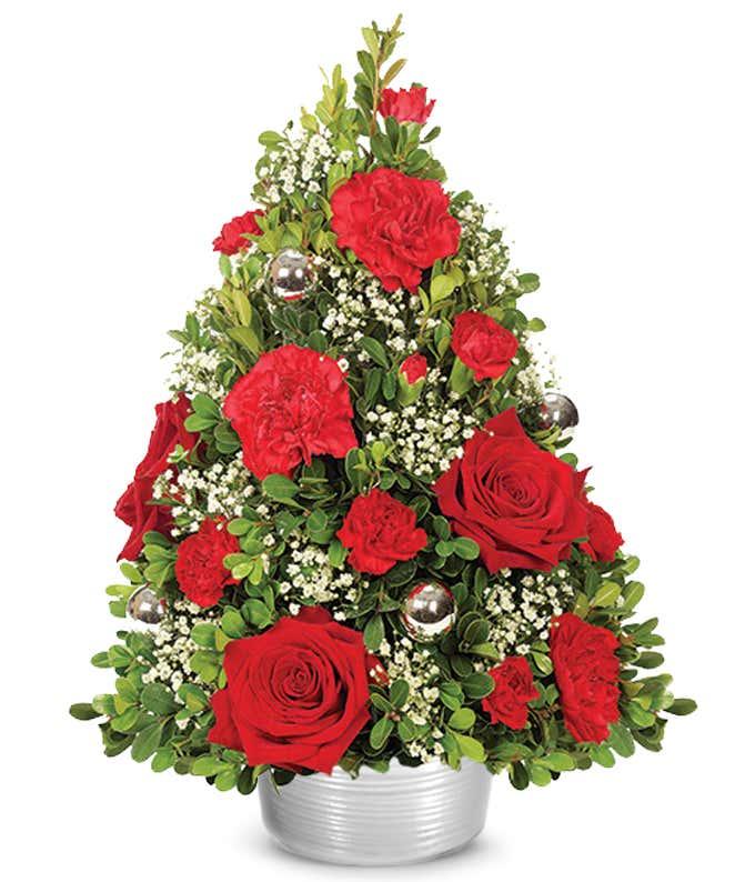 Live Christmas Tabletop Tree