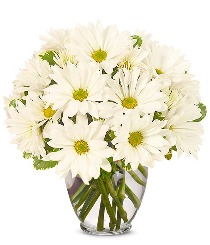 Pushing Daisy Bouquet
