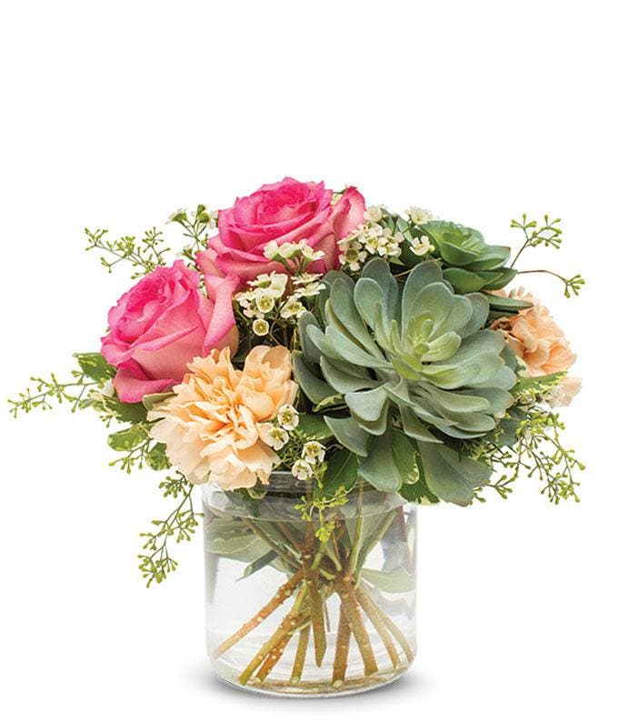 Roses, carnations and succulent delivery