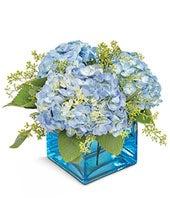 Spring Blues Hydrangea Planter