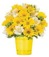 Sunshine Daisies...