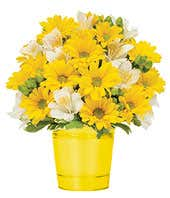 Sunshine Daisies Bouquet