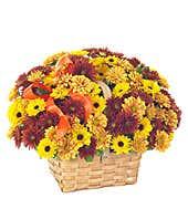Fresh Daisy Bouquet