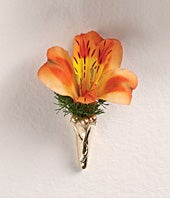 Orange Alstroemeria...