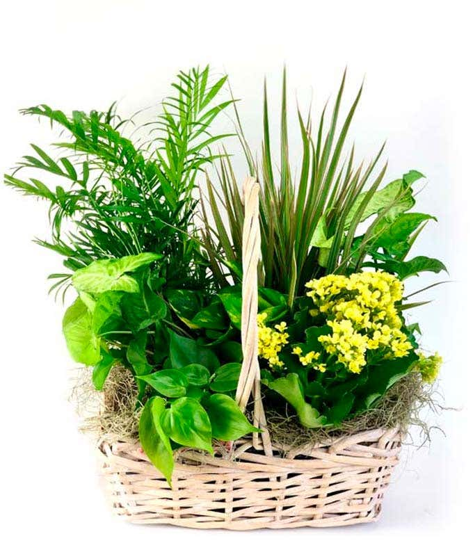 Flowers and Foliage Dish Garden
