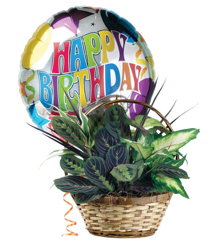 Dish garden plant with birthday balloon