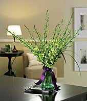 Green orchids and lily grass arrangement