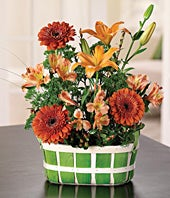 Just Because Daisy Basket
