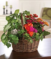 Kalanchoe Garden Basket
