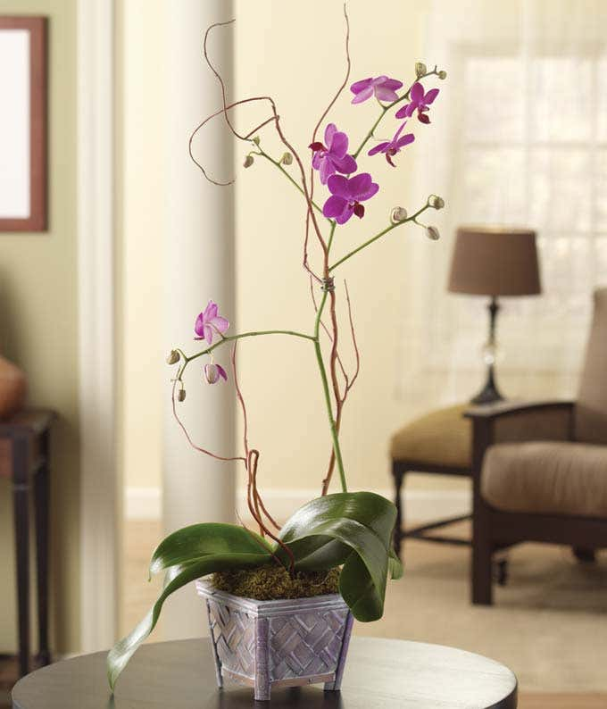 Purple Orchids plant in wood planter