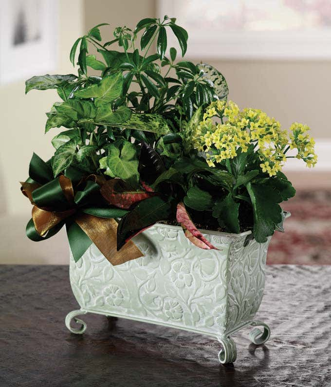 kalanchoe plant arranged in a decorative planter