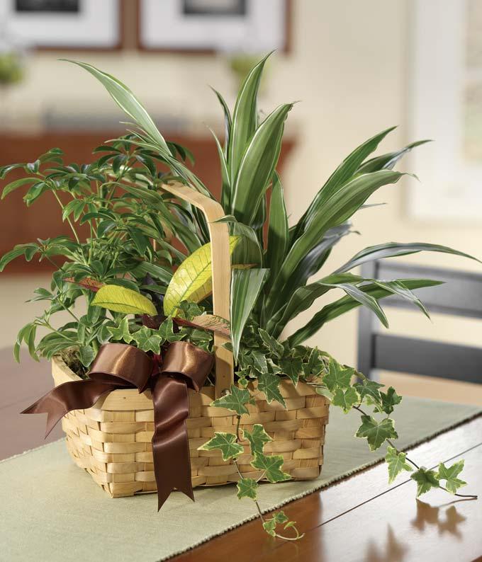 Plants A-Plenty