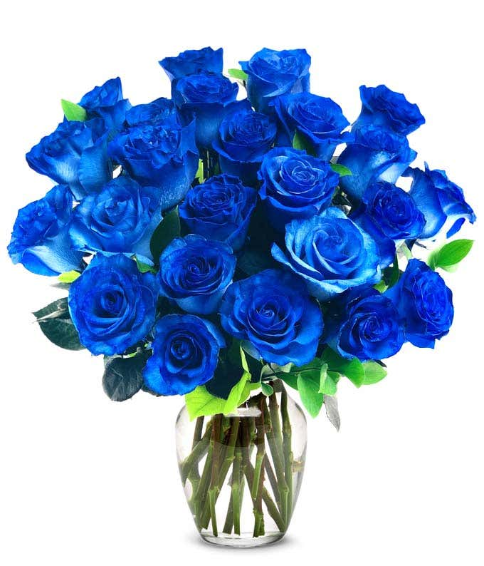 Two Dozen Blue Jewel Roses