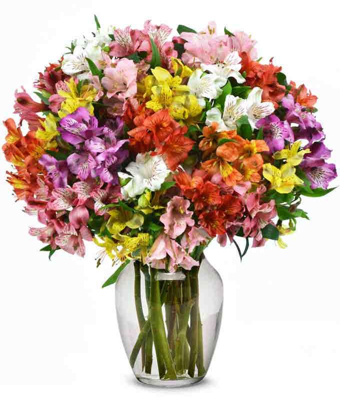 Rainbow Alstroemeria Bouquet 25 Stems
