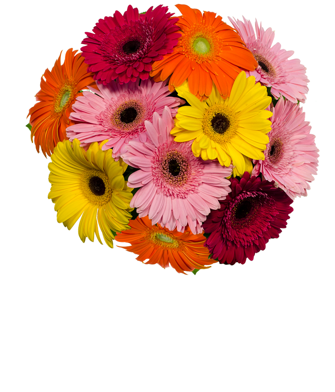 Assortment of gerbera daisies for next day delivery