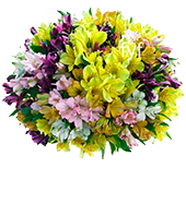 100 Blooms of Spring Lilies