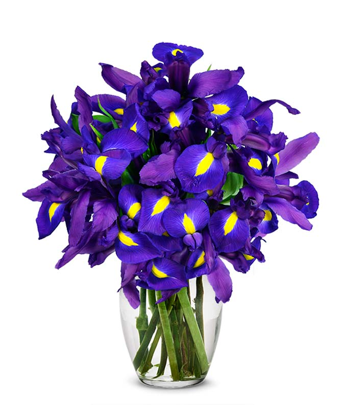 Blue iris flower bouquet