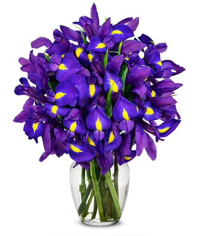 Stunning Blue Iris -...