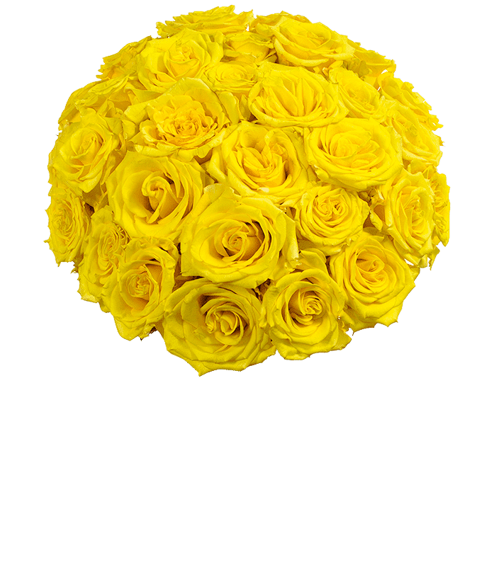 Next day delivery of yellow roses