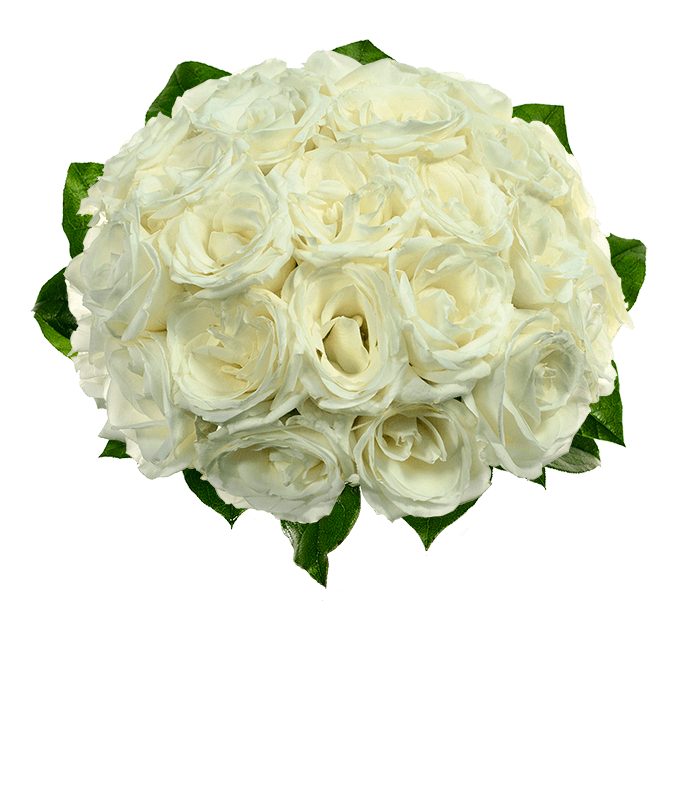 Two dozen white roses for delivery tomorrow