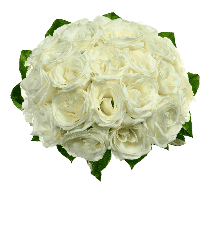 Two dozen white roses