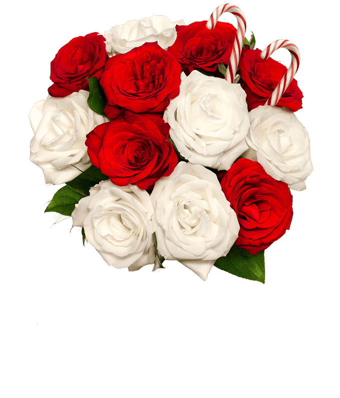 Sweet Candy Cane Rose Bouquet
