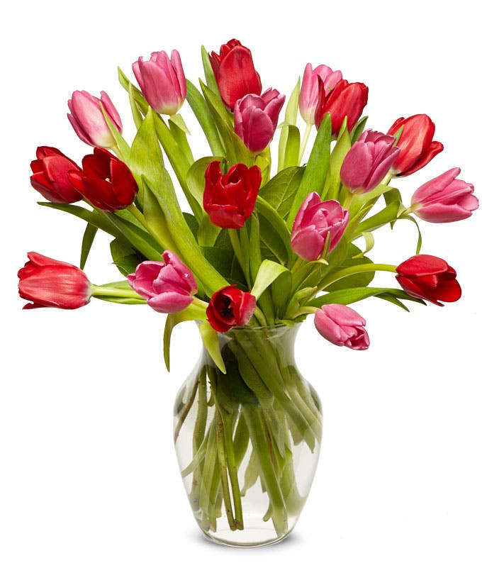 One dozen pink tulips and red tulips are Valentines day flowers