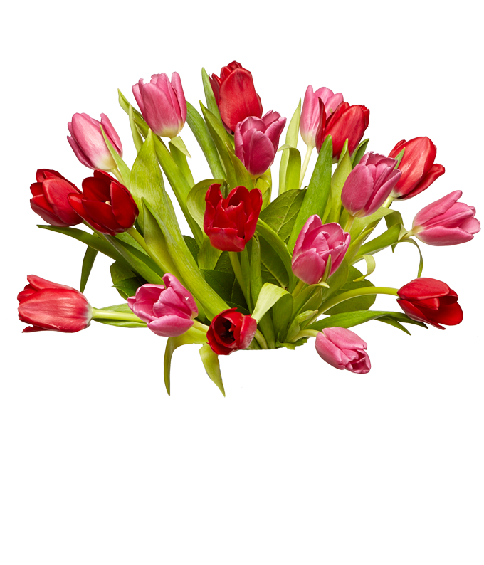 18 Stems of pink tulips and red tulips for delivery