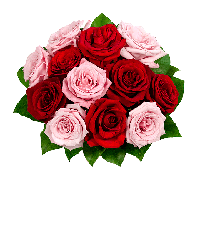 A Dozen Red & Pink Roses