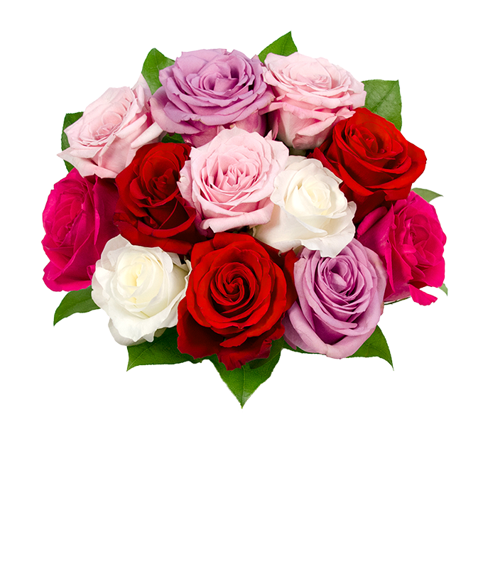 One dozen pink, red, white and purple roses for Valentine