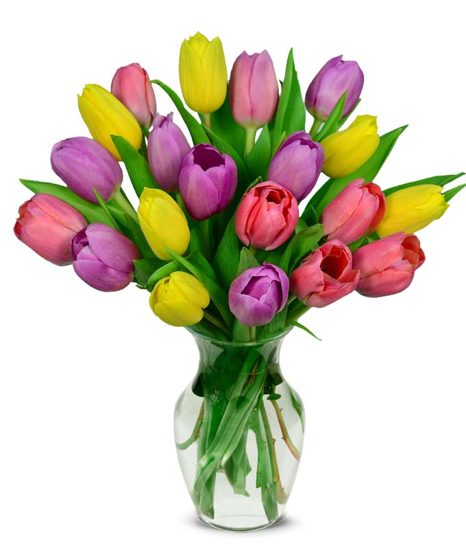 spring tulips for delivery with purple and pink tulips